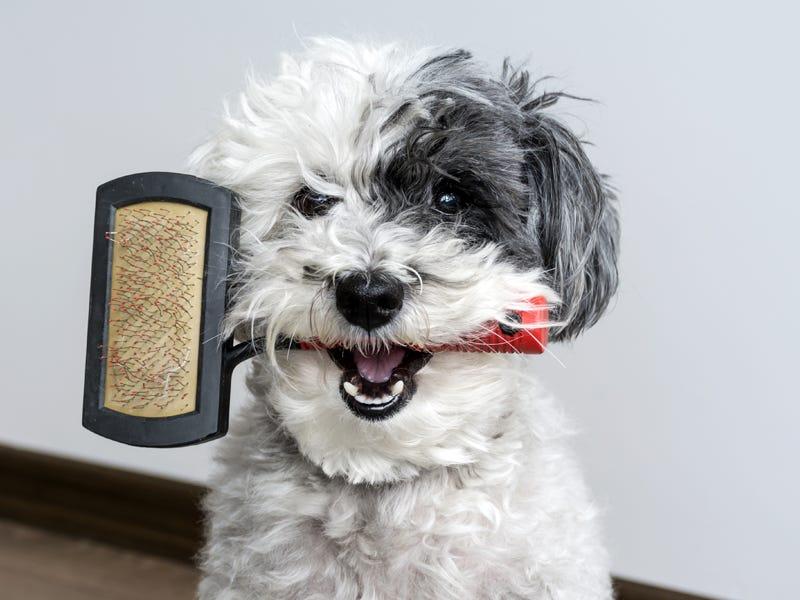 Choosing The Right Dog Brush